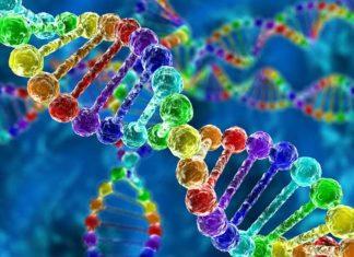 AMD terapia genowa